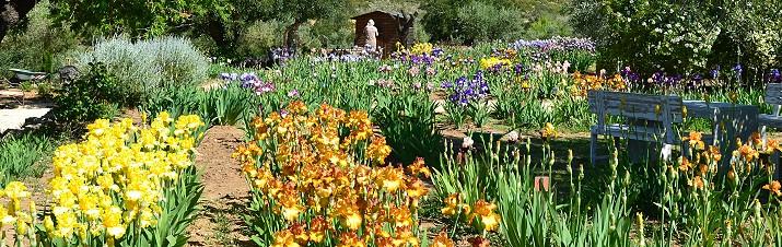 Jardin d 39 iris marnes for Aubade jardin d iris